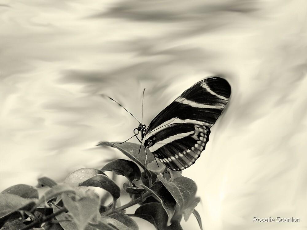 Zebra Wing in Sepia by Rosalie Scanlon