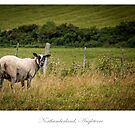 Northumberland countryside by Jacinthe Brault