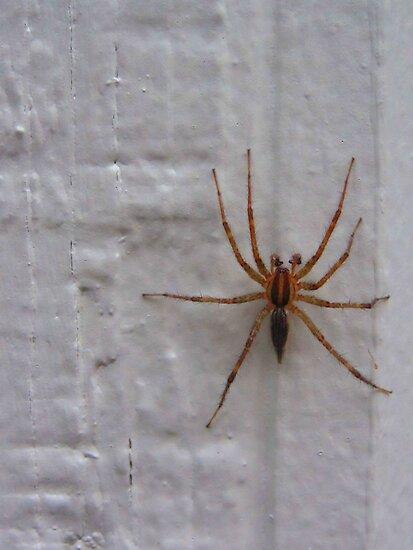 Siding Spider not so Sly by M-EK