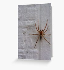 Siding Spider not so Sly Greeting Card
