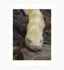 """""""White Boaconstrictor""""  by Carter L. Shepard Art Print"""