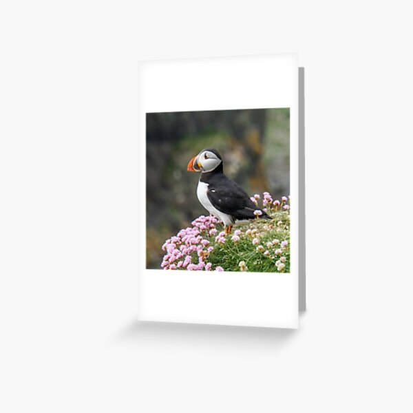 Puffin amongst pink flowers. Greeting Card