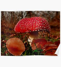 Wild Mushrooms Poster