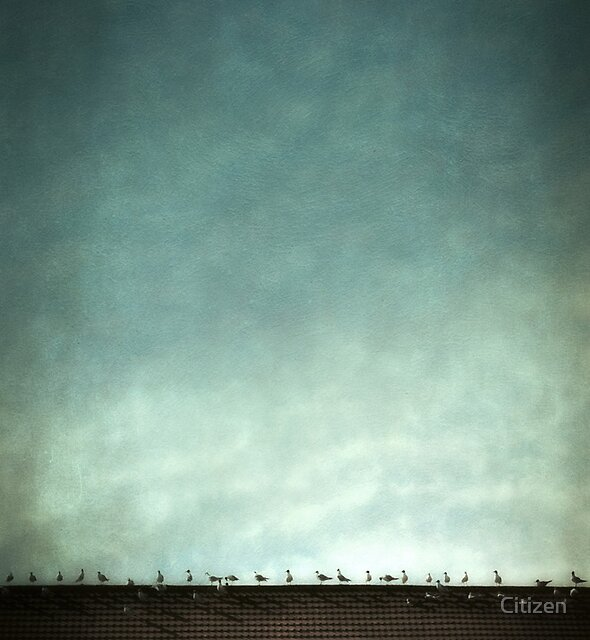 Birds on a hot tile roof by Nikki Brown