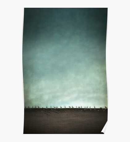 Birds on a hot tile roof Poster