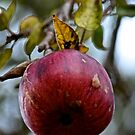 The Ripe Apple by Spencer Backman