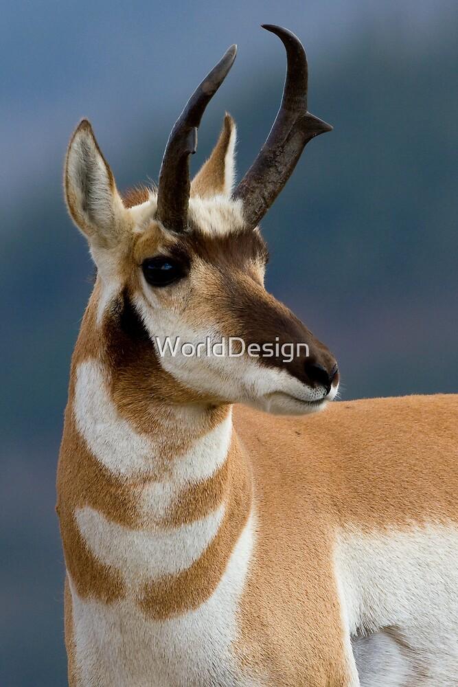Pronghorn Portrait by WorldDesign
