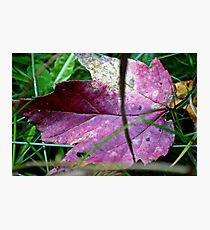 Purple leaf Photographic Print