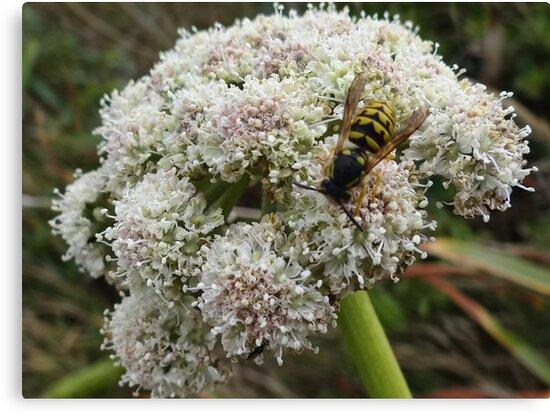 Have you heard the buzz? by vigor