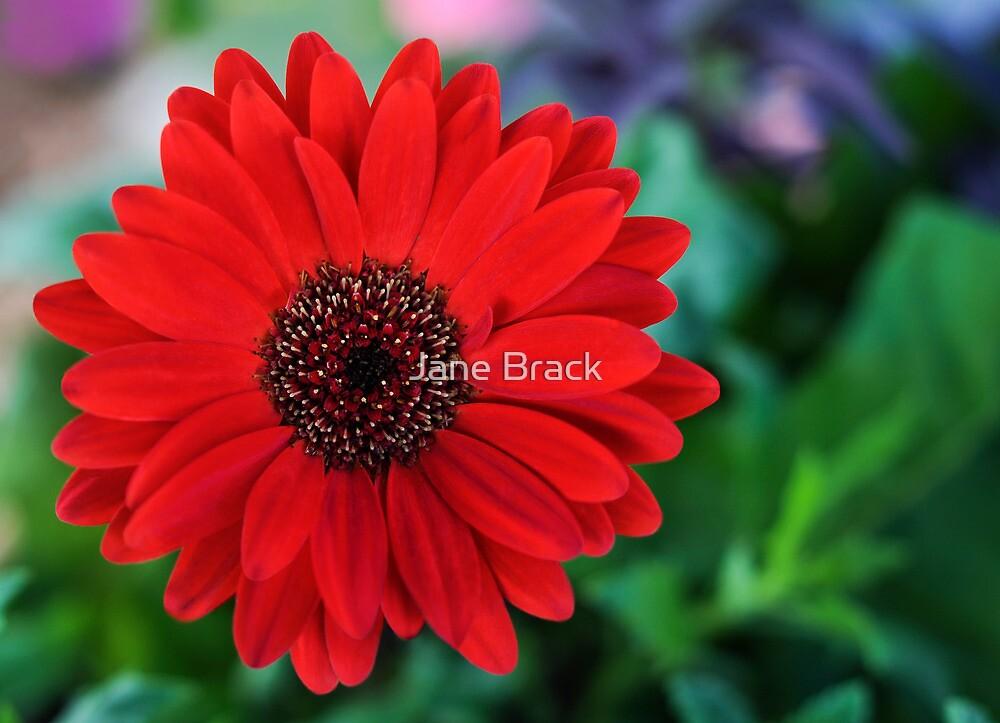 Simply Red by Jane Brack