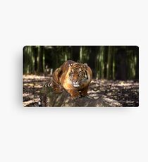 Big Paws, Sharp Claws Canvas Print