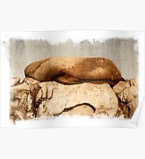Stellar Sea Lion, Belle Chain Islets Poster