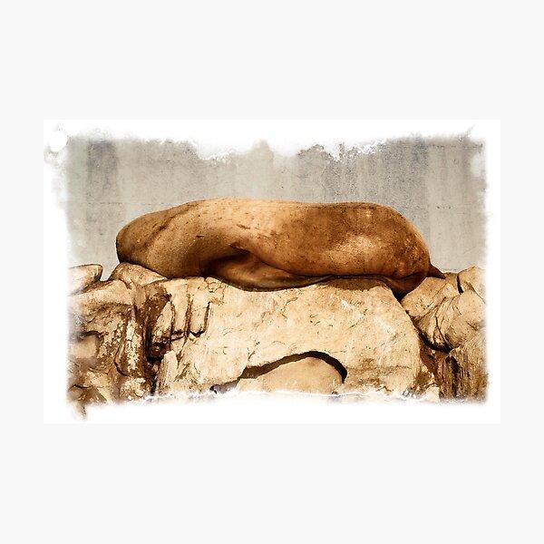 Stellar Sea Lion, Belle Chain Islets Photographic Print