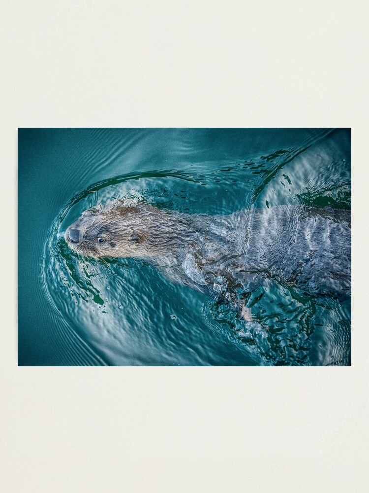 Alternate view of River Otter Photographic Print