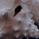 Snail Shell of a big Ocean Snail - Concha de Caracol by PtoVallartaMex