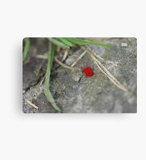 Little red insect Canvas Print