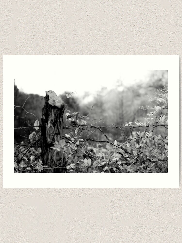 Alternate view of Country Road Art Print