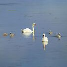 The Progress Of The Swan Family by Fara
