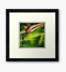 Hemerocallis Flower Framed Print