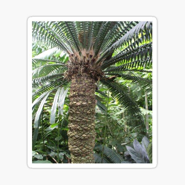 Tropical Palm Tree Fern, Kew Gardens Sticker