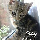 Kittens Birthday Message by Laura Mancini