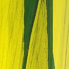 Oil-seed rape fields by Graham Hiscock