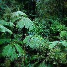 Kiwi Jungle 2 by Adam Northam