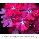 Summer Flowers [no.21] by Solomon Walker