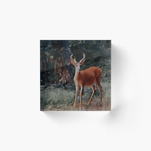 The yearling Buck Deer Acrylic Block