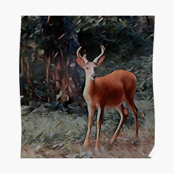 The yearling Buck Deer Poster