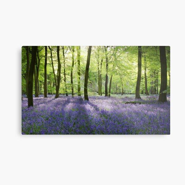 Bluebell Woods Metal Print
