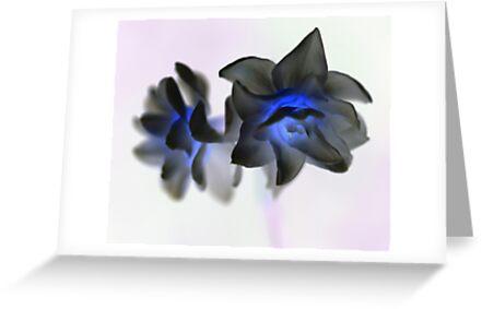 Daffodils by Julien Johnston