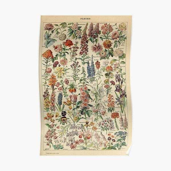 Vintage Flower Poster Poster