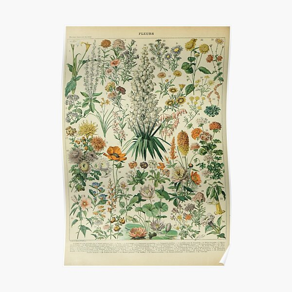Vintage Botanical Poster Poster