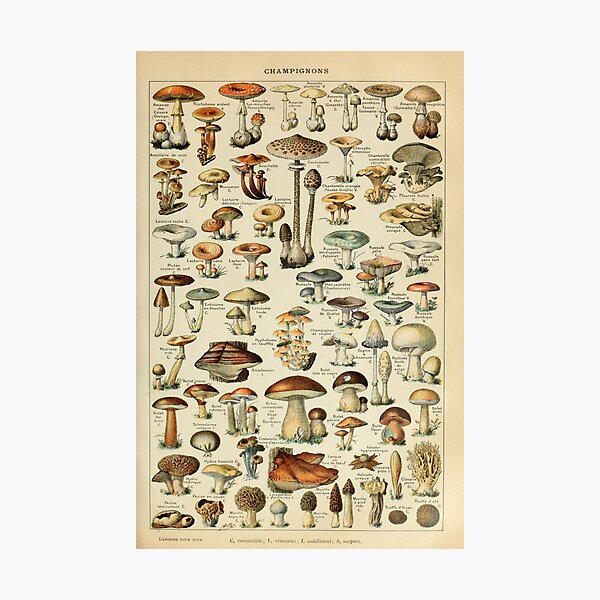 Vintage Mushroom Poster Photographic Print