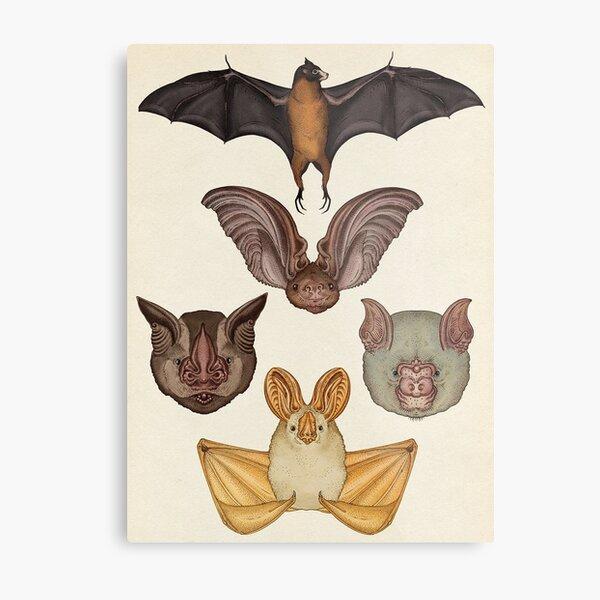 murciélago Lámina metálica