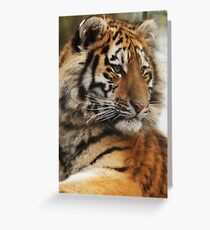 Cute Cub Greeting Card