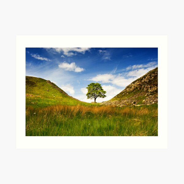 Sycamore Gap on Hadrian's Wall Art Print