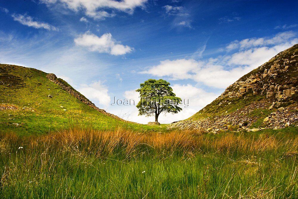 Sycamore Gap on Hadrian's Wall by Joan Thirlaway