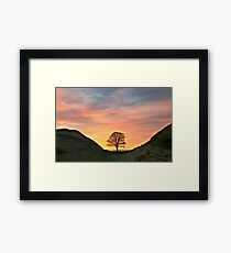 Sycamore Tree on Hadrian's Wall Framed Print