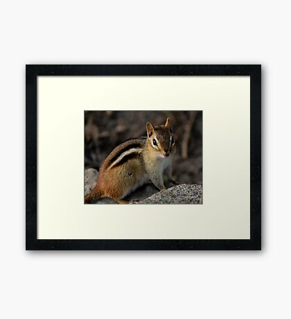 Chippy Framed Print