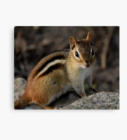 Chippy Canvas Print