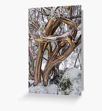 Australian Snow Gums Greeting Card