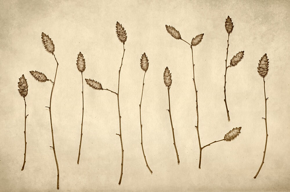 Fir Cones Forest by Paula Belle Flores