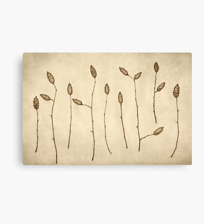 Fir Cones Forest Canvas Print