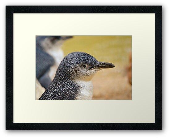 Beautiful Penguin close up. by Carlo Marandola