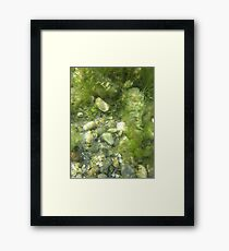 Underwater Vegetation 511 Framed Print
