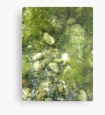 Underwater Vegetation 511 Metal Print