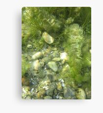 Underwater Vegetation 511 Canvas Print