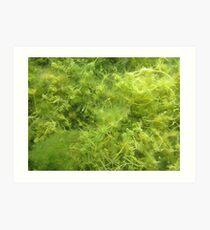 Underwater Vegetation 514 Art Print